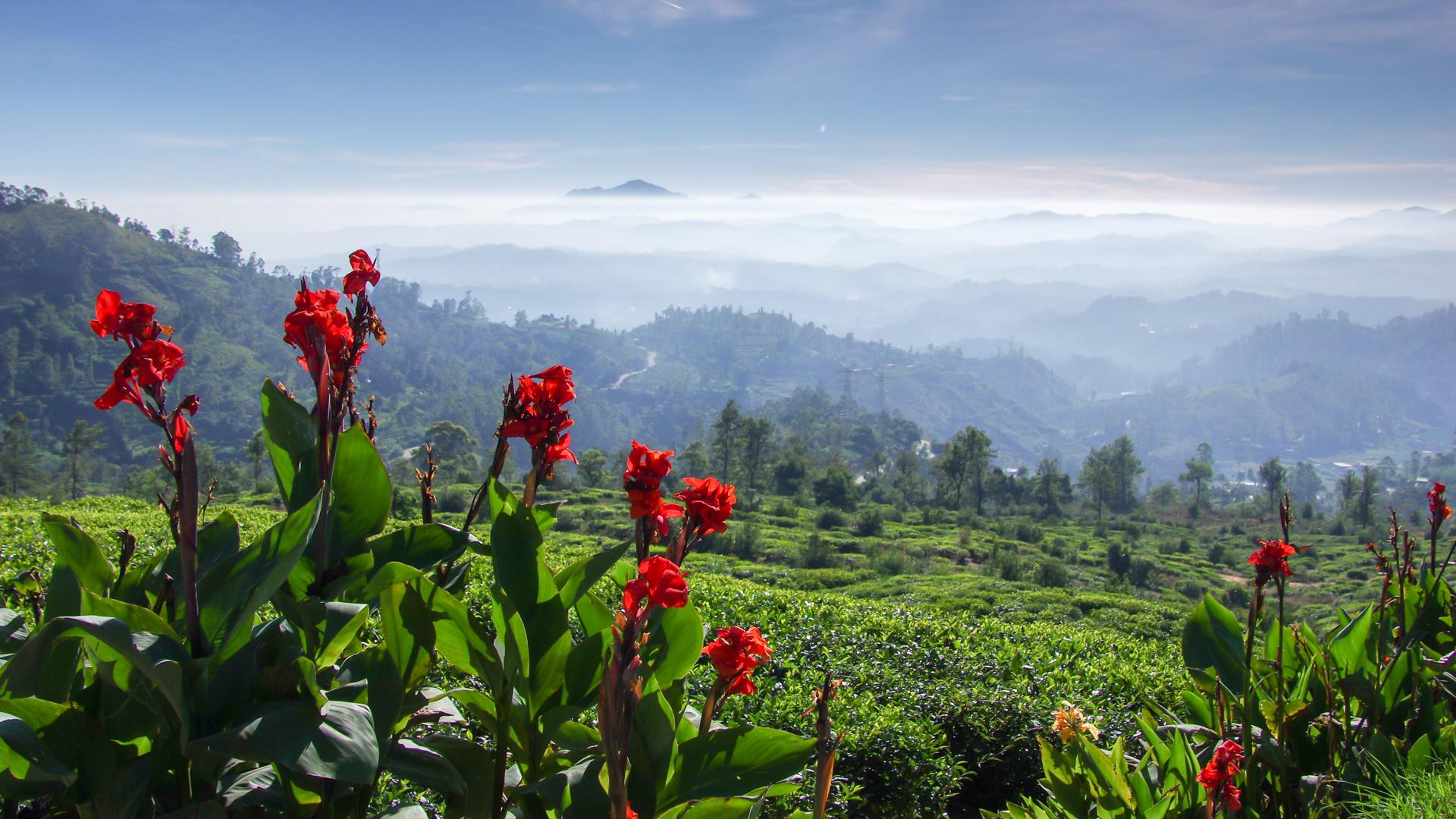 Sri Lanka mäed